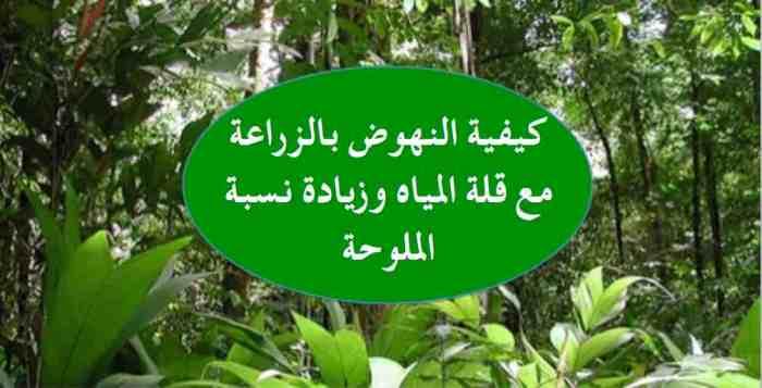 غابات ٢